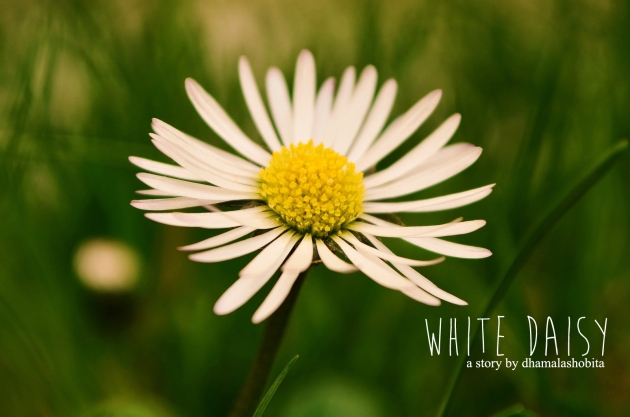 White Daisies Tumblr White Daisy | Fiction Jukebox